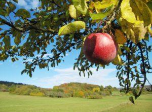 apple-1817998_1920