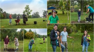 Tree Planting Collage