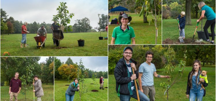 Food Forest Tree Planting – Shear Park